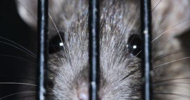Sådan holder du mus og rotter ude af huset om vinteren (og resten af året)